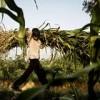 Caste discrimination, child labour and the Nobel peace prize winner